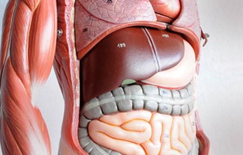 Как определить цирроз печени у мужчин и женщин
